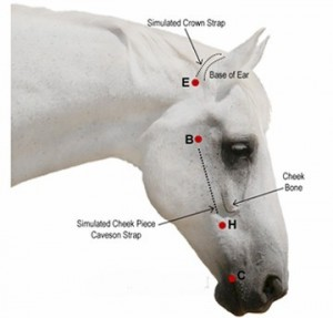 bridle measurements